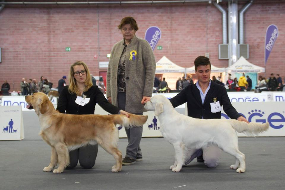 International Dog Show Modena