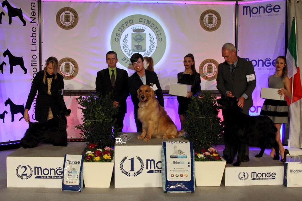 International Dog Show Biella