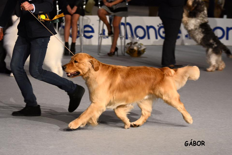 International Dog Show Arezzo