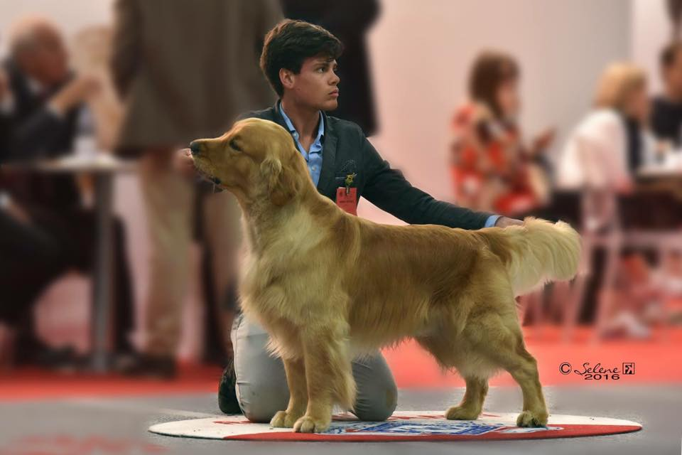 International dog show Reggio Emilia