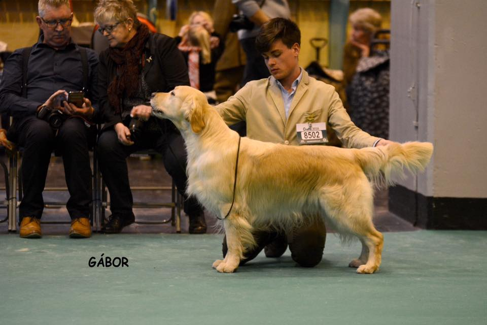 Northern & Yorkshire GRC Cham Show