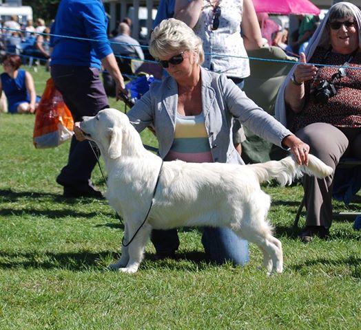 Richmond Dog Show