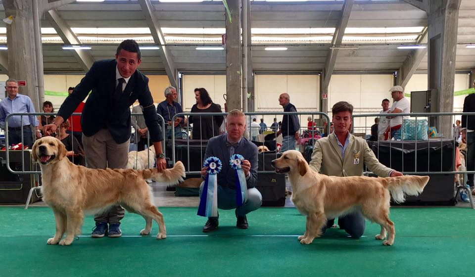 RCI Golden Retriever Speciality Show Macerata