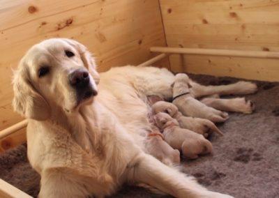 2016 Litter Olvinglay Tico e Rose puppies