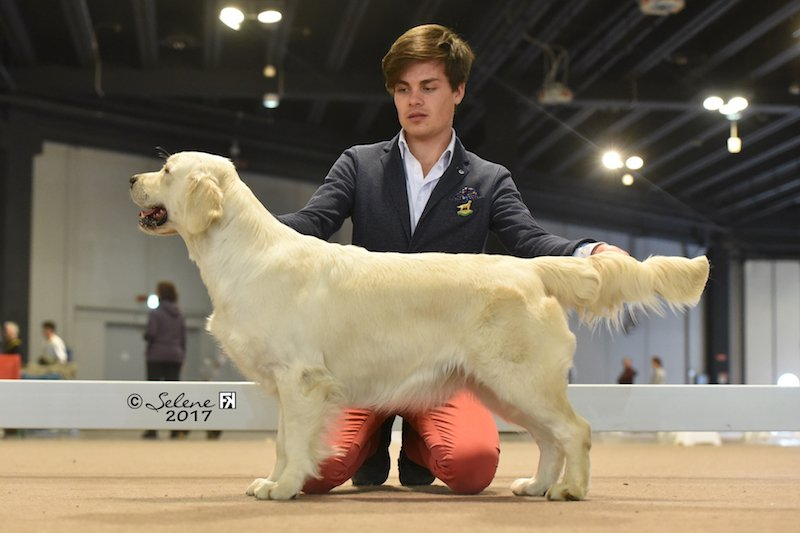 National Dog Show Vicenza