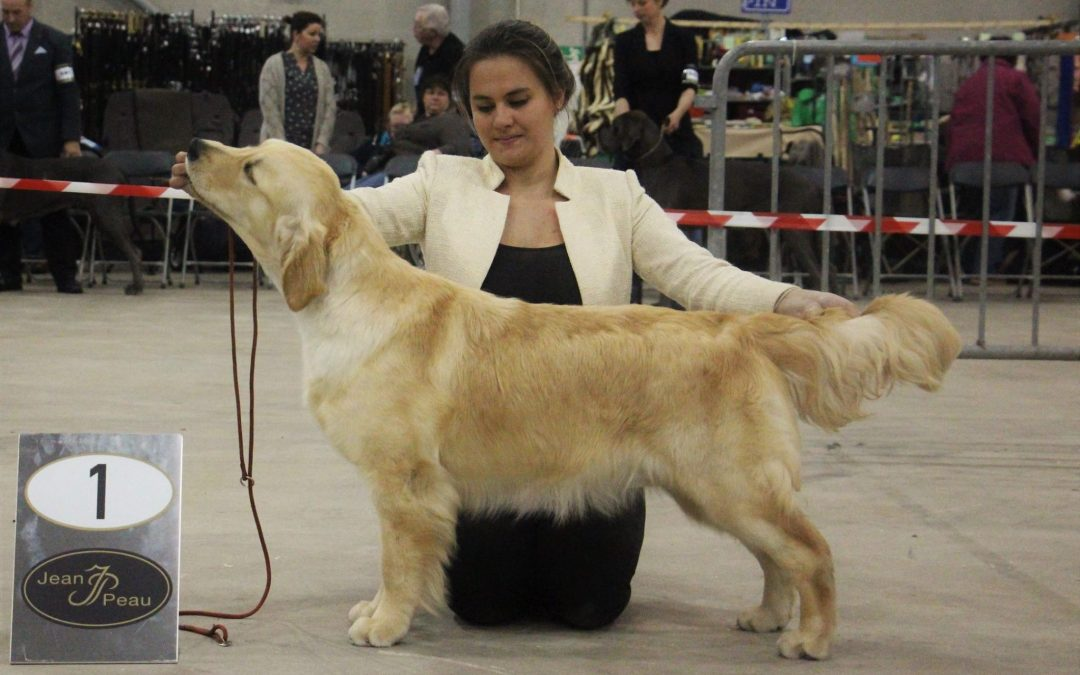 International Dog Show Goes (NL)