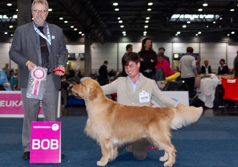 World Dog Show '17