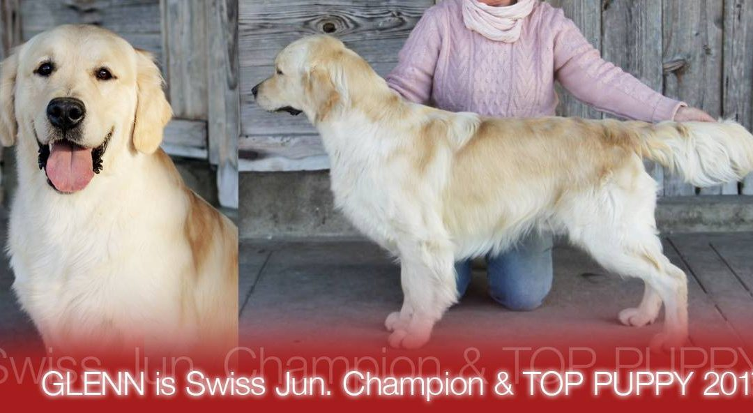 Glenn TOP SWISS PUPPY 2017