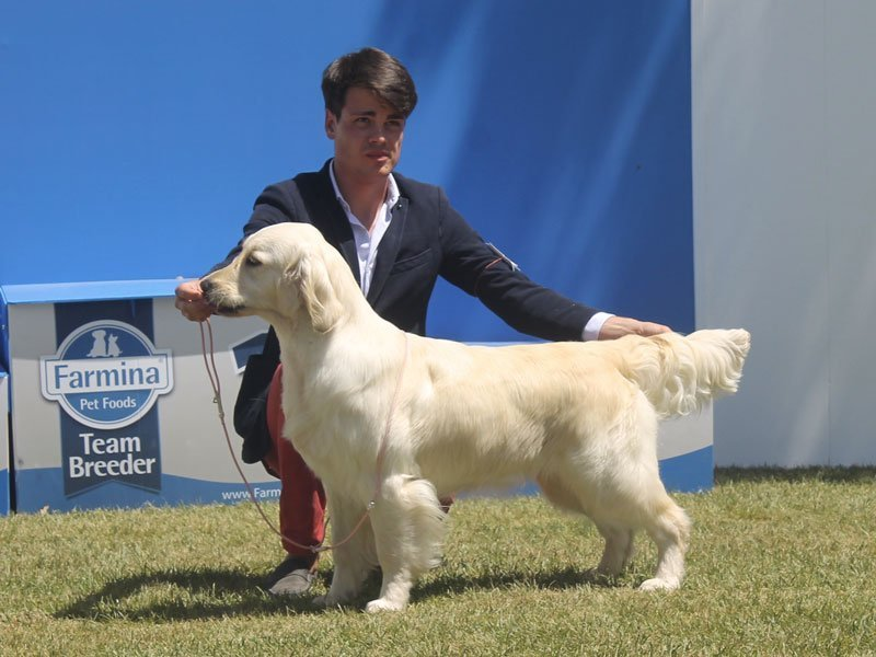 RCI All Retrievers Specility Viterbo