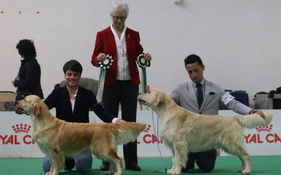 RCI All Retrievers Club Show Cesena