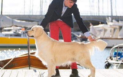 RCI All Retrievers Club Show Genova