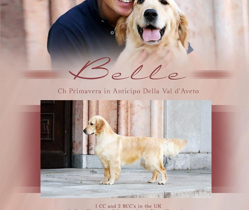 Belle TOP Retriever 2018 in Italy