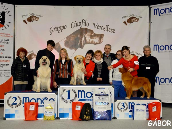 International Dog Show Vercelli