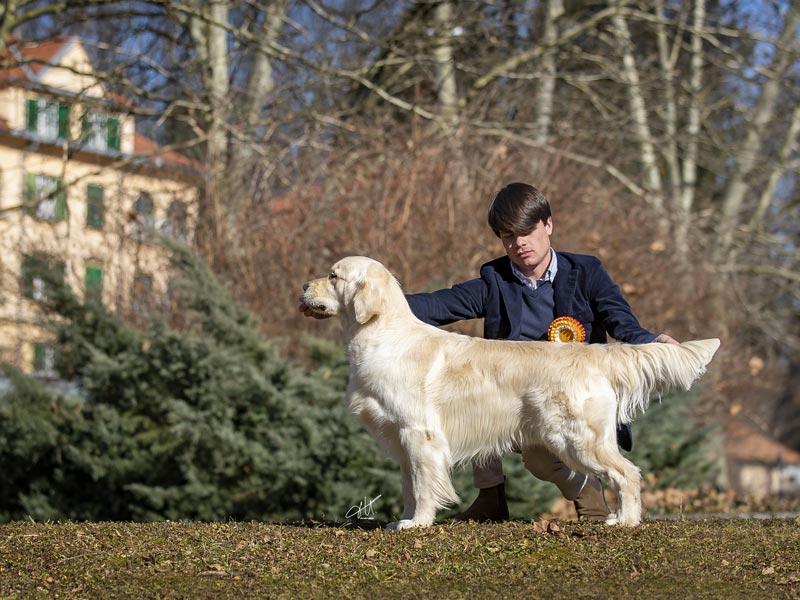 International Dog Show Celje
