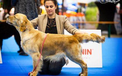International Dog Show Eindhoven