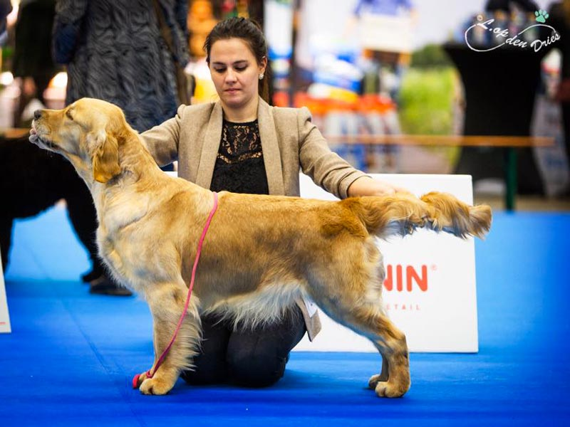 International Dog Show Eindhoven