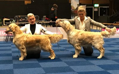 International Dog Show Groningen