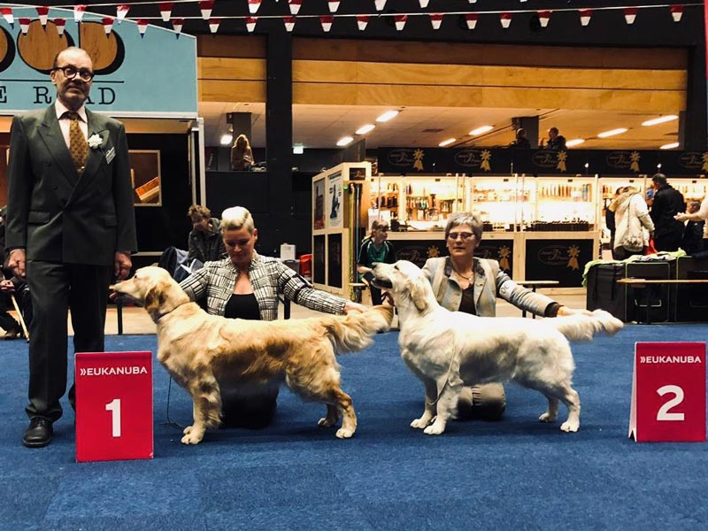International Dog Show Groningen