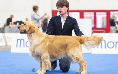 International Dog Show Parma & Piacenza