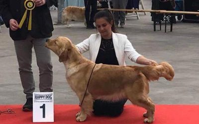 International Dog Show Hazerswoude