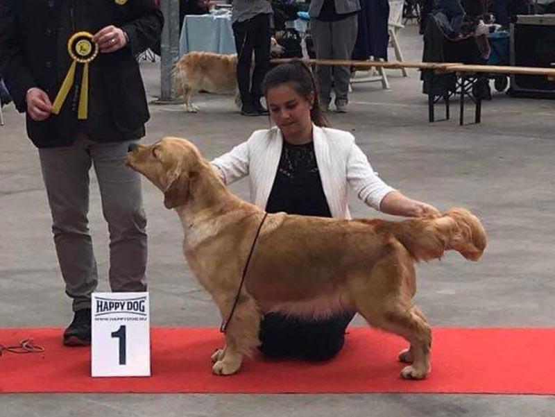 International Dog Show Hazerswoude