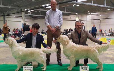 International Dog Show Dole (Fr)