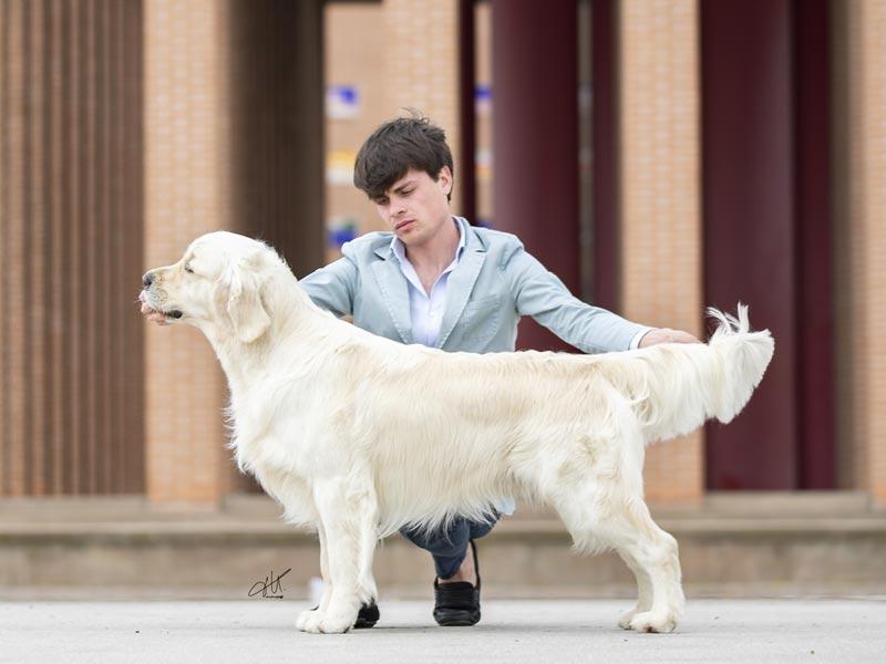 International Dog Show Ravenna