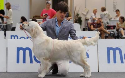 International Dog Show Milano