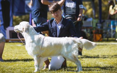 Swiss Retrievers Club Show