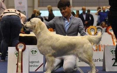 International Dog Show Tulln