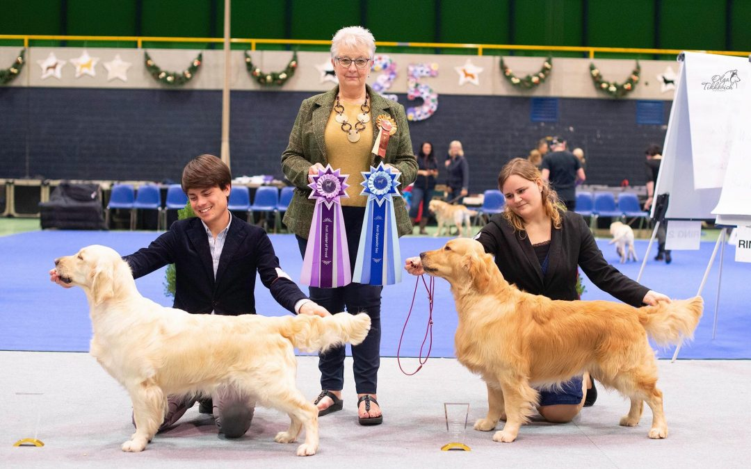 Swiss Retrievers Club Christmas Club Show
