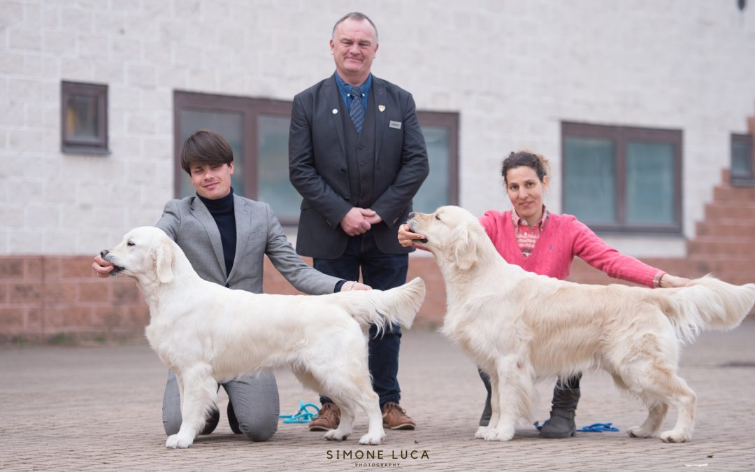 Vercelli International Dog Shows