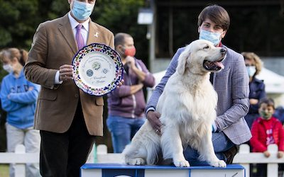 Double Retrievers Speciality Shows Orvieto