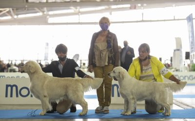 International Dog Show Turin